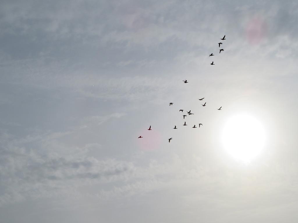 MirandaWandelt - Amsterdamse Waterleidingduinen vogels