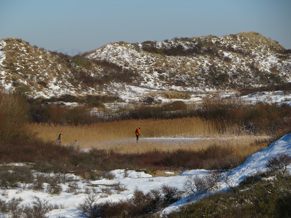 MirandaWandelt - Nationaal Park Zuid Kennemerland - gele route - op het ijs