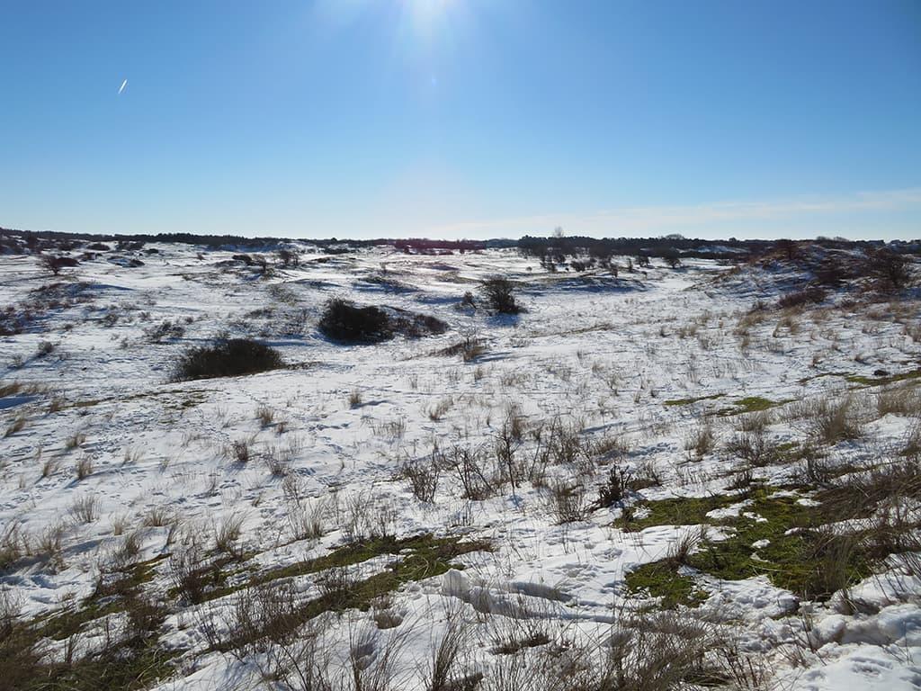 MirandaWandelt - Nationaal Park Zuid Kennemerland - gele route - uitzicht einde