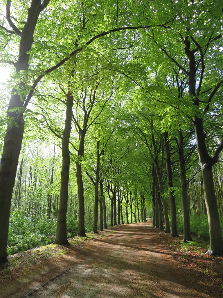 De Horsten - Bos