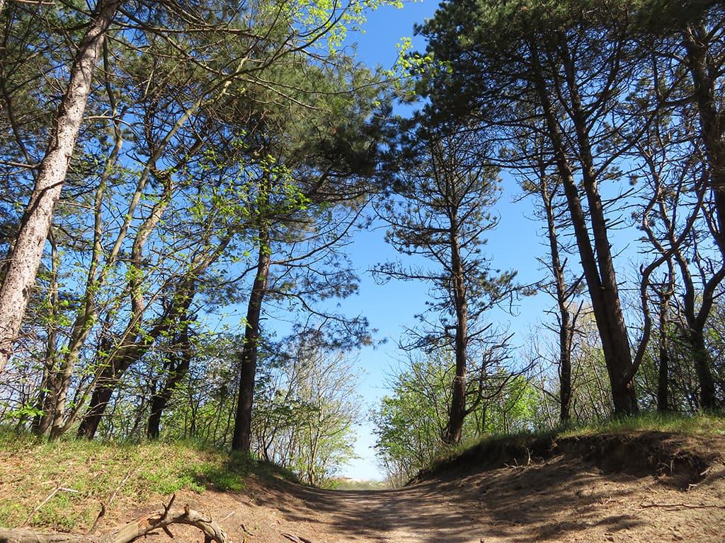 Nederlands Kustpad - bospad