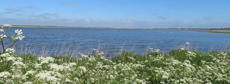 Vogelexcursie Lauwersmeer - MirandaWandelt